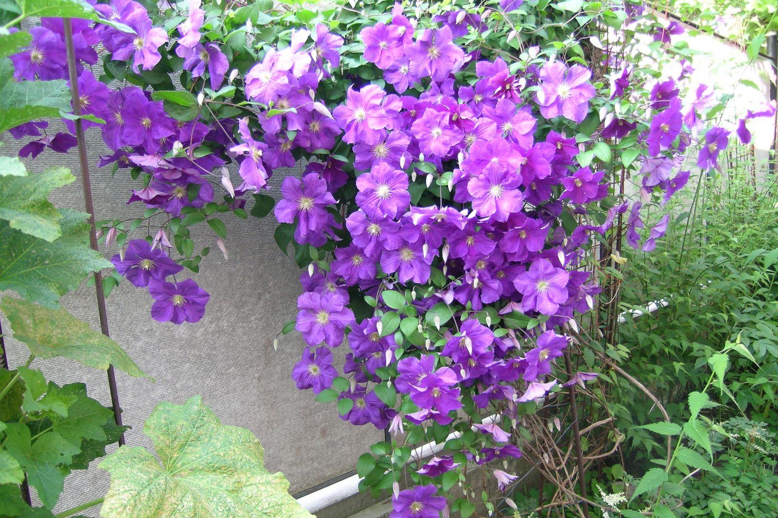 Энциклопедия многолетних цветов от а до я фото